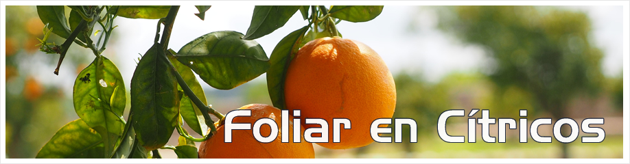 918_240_FOLIAR_CITRICOS