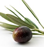 Uso de Efluentes Almazaras como Fertilizante (Riego)
